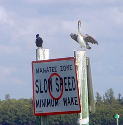 Safe the Manatees, slow speed zone
